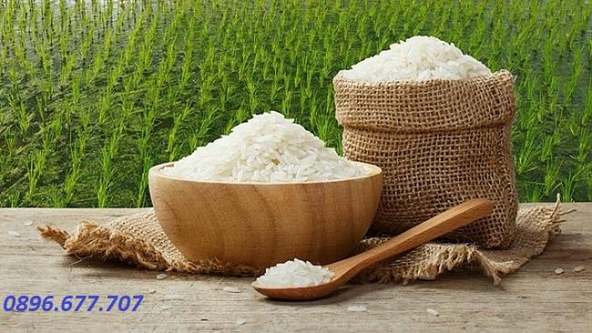 giá gạo hôm nay